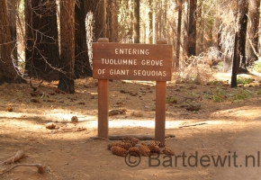 Yosemity en Sequoia National Park (18) (Medium)