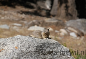 Yosemity en Sequoia National Park (30) (Medium)