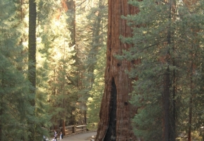 Yosemity en Sequoia National Park (34) (Medium)