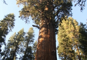 Yosemity en Sequoia National Park (37) (Medium)