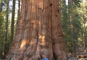 Yosemity en Sequoia National Park (39) (Medium)