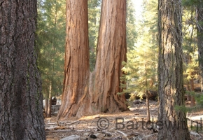 Yosemity en Sequoia National Park (40) (Medium)