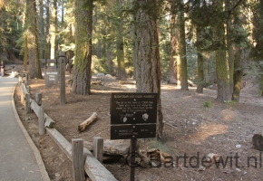 Yosemity en Sequoia National Park (41) (Medium)