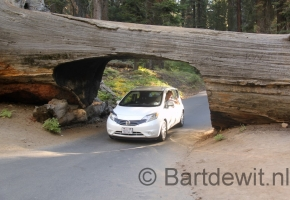 Yosemity en Sequoia National Park (42) (Medium)